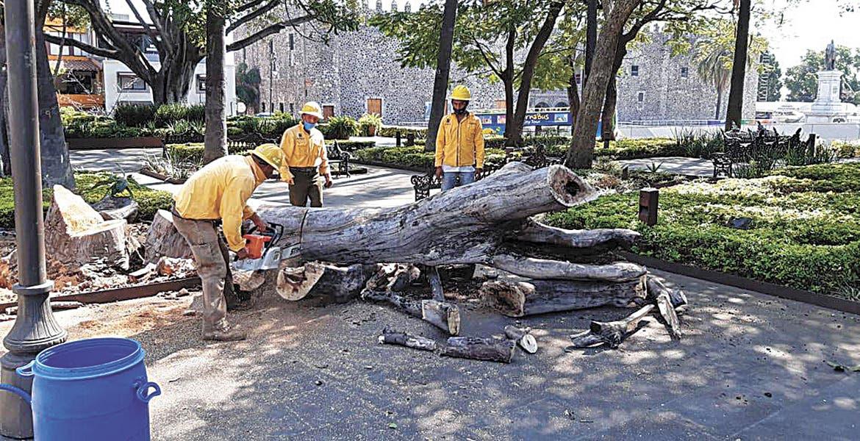 Sustituyen árboles secos en Cuernavaca