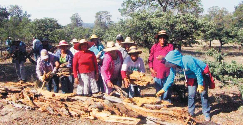 Objetivo. Los proyectos pretenden incentivar la protección, conservación y restauración de los recursos naturales.