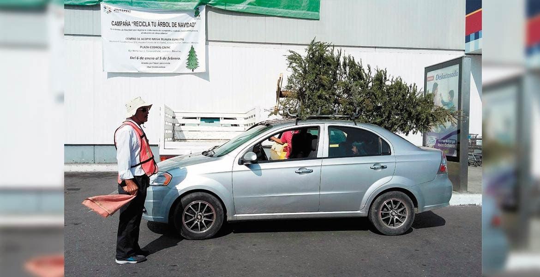 Recolección. José Iván Fernández Galván mencionó que durante todo el mes de enero recibirán los arbolitos de navidad, los cuales volverán composta a través de un proceso con unos molinos con maquinaria especial, para contribuir al cuidado del medio ambiente.