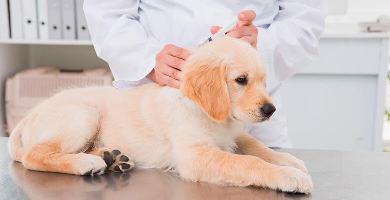 ¿Buscas vacunar gratis a tu perro en Jiutepec? Checa en la nota cómo hacerlo