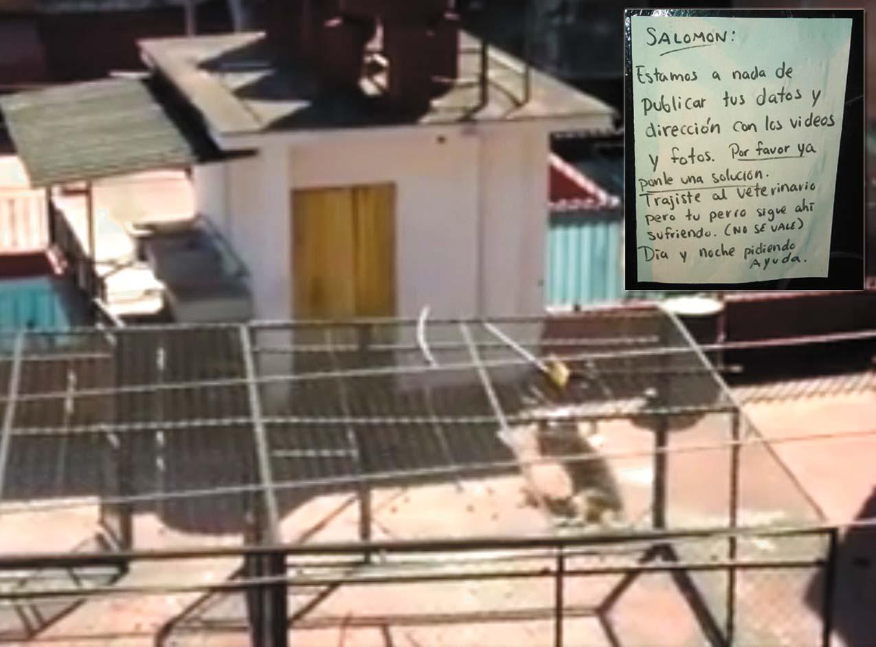 Captura. En la imagen se aprecia al pastor alemán arrastrarse en el techo de la vivienda.