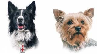 ¡JUSTICIA! Athos perro especialista en rescate y su ami...