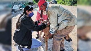 Vacunan a 118 perros para que no enfermen a especies nativas de Sierra Montenegro  2