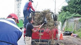Retiran maleza en calles de Cuautla 2