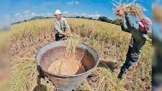 Convocan a programa de fertilizantes en Morelos 2