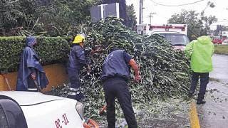Provoca lluvia caída de árboles en Jiutepec 2