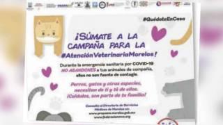 Lanzan campaña para cuidar a tu mascota en tiempos de COVID-19 2