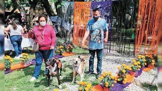 Buscan mascotas rescatadas un nuevo hogar