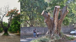Ex diputado Roberto Fierro Vargas fue quien taló polémico árbol en Cuernavaca 2