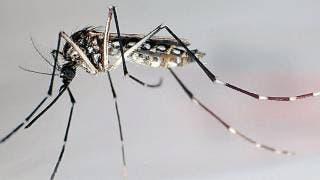 Se duplican los casos de dengue; se suman 32 en la última semana en Morelos 2