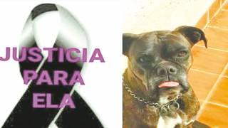 """Van tras asesino de """"Ela"""", perrita de Huitzilac atacada con ácido 2"""