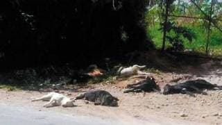 Hay denuncia por envenenamiento de perros en Ocotepec 2