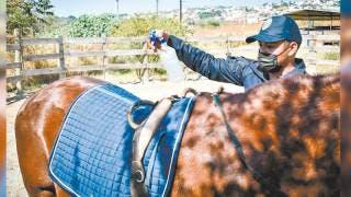 Ofrece CES equinoterapia en Morelos 2