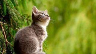 Gatos, menos adoptables pero más independientes que los perros 2