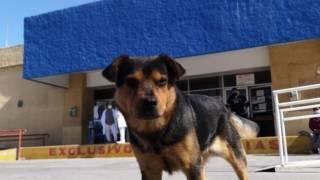 Perro espera a su dueño afuera de hospital; paciente murió de COVID19 2