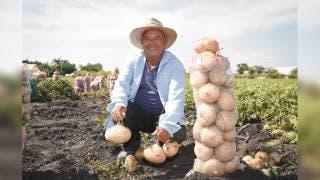 Morelos se encuentra entre los cuatro líderes productores de jícama 2