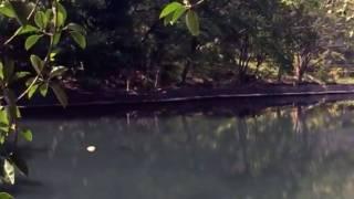 Limpian el lago de Chapultepec, en Cuern...