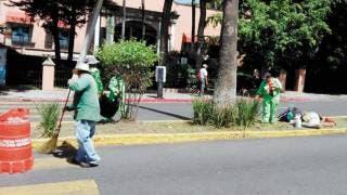 Embellecen camellones en Cuernavaca