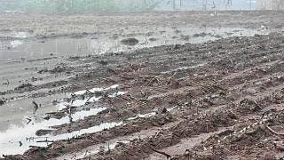 Ocasionan lluvias y granizadas daños a cultivos de maíz y sorgo en Axochiapan 2