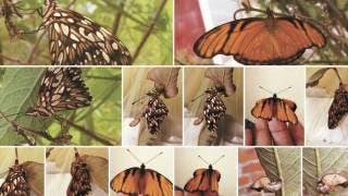 Invitan a fotografiar plantas y animales en Morelos 2