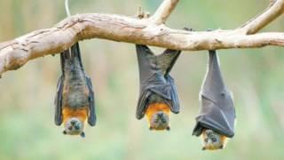 Descartan investigadores de la UNAM que COVID-19 tenga origen en murciélagos 2