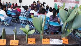 Buscan ley para considerar al nopal como producto básico y estratégico de Morelos 2
