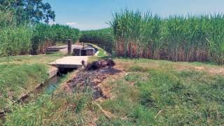 Descubren un cuerpo calcinado en Yautepec 2