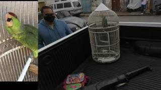 Ladrones cargan hasta con el perico de un restaurante de Jojutla 2