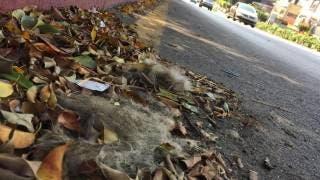 Atienden en Cuernavaca denuncia por un perro muerto en la calle 2