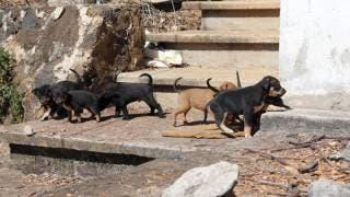 ¿Buscas adoptar un cachorrito? Hay 7 disponibles para ti, en Cuernavaca 2