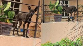 Imagen de perro famélico en Cuernavaca conmueve en las redes sociales 2
