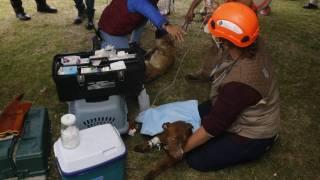 Por fin: rescatan a los 2 perritos que cayeron al socavón de Puebla 2