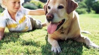 Un perro como mascota beneficia desarrollo y autoestima de los niños
