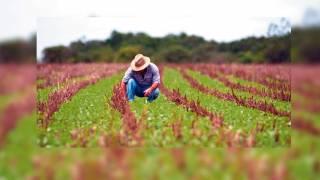 Estrategias. Los agrónomos son fundamentales para el desarrollo del campo.