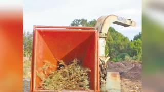 Llama SDS Morelos a reciclar arbolito de Navidad