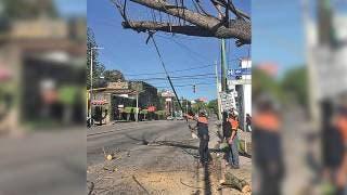 Retiran árbol caído de avenida Plan de Ayala 2