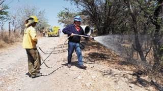 Sofocan 4 incendios forestales en Tlalnepantla, Huitzilac y Tepoztlán 2