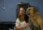 'Capitán'el perro que aventaron de un edificio en CDMX vivirá en Morelos