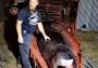 Encuentranballena muerta con 40 kilos de plástico acumulados en el estómago