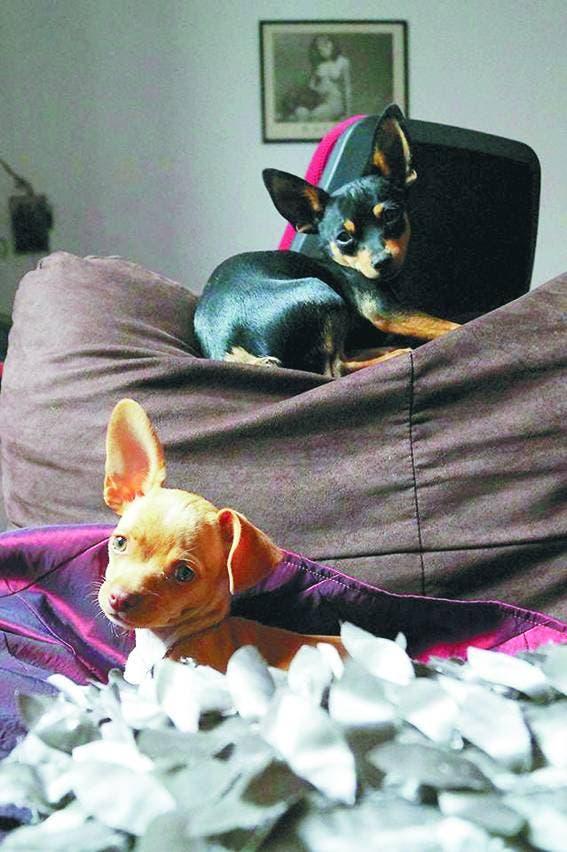 Choco y Flan.jpg