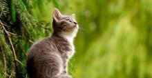 Gatos, menos adoptables pero más independientes que los perr...