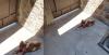 Perro Pitbull se mete a casa ajena, hiere a mascota y encierra a la dueña, en Cuernavaca